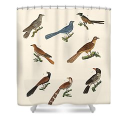 Cuckoos From Various Countries Shower Curtain by Splendid Art Prints