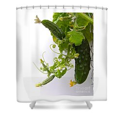 Cucumber Dance Shower Curtain