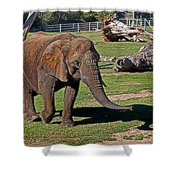 Cuddles Searching For Snacks Shower Curtain