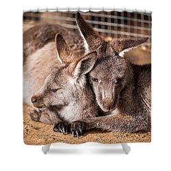 Cuddling Kangaroos Shower Curtain