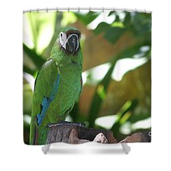 Curacao Parrot Shower Curtain