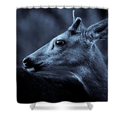 Curious  Shower Curtain by Adria Trail