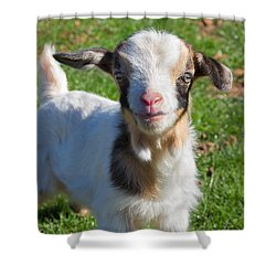 Curious Baby Goat Shower Curtain