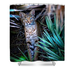 Curious Bobcat Shower Curtain by Mark Andrew Thomas