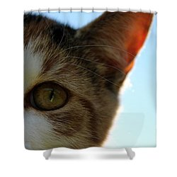 Curious Cat Shower Curtain