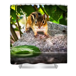Curious Chipmunk  Shower Curtain by Bob Orsillo