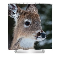 Shower Curtain featuring the photograph Curious Fawn by Bianca Nadeau