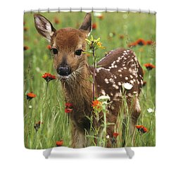Curious Fawn Shower Curtain