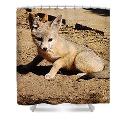 Curious Kit Fox Shower Curtain