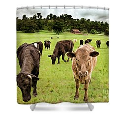 Curious Shower Curtain by Linda Blair