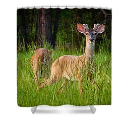 Curious Shower Curtain by Linda Unger