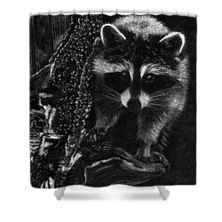 Curious Raccoon Shower Curtain