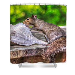 Shower Curtain featuring the photograph Curious Squirrel by Rob Sellers