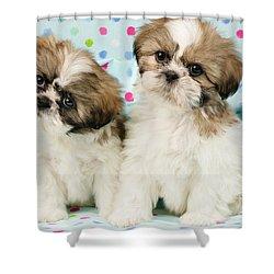 Curious Twins Shower Curtain by Greg Cuddiford