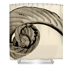 Curled Shower Curtain by Melinda Ledsome