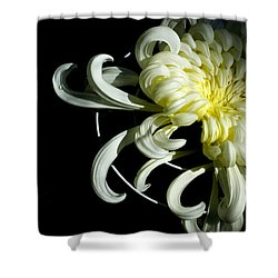 Curling Mum Shower Curtain