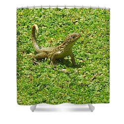 Curly-tailed Lizard Shower Curtain