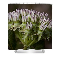 Shower Curtain featuring the photograph Curtiss' Milkweed #3 by Paul Rebmann
