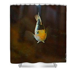 Cute And Content Shower Curtain by Byron Varvarigos