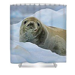 Cute And Cuddly... Shower Curtain by Nina Stavlund