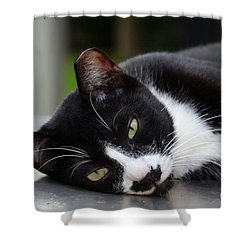 Cute Black And White Tuxedo Cat With Nipped Ear Rests  Shower Curtain by Imran Ahmed