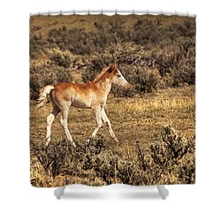 Cute Colt Wild Horse On Navajo Indian Reservation  Shower Curtain by Jerry Cowart