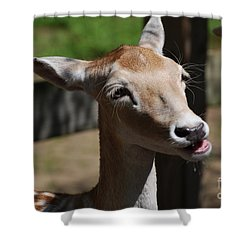 Cute Deer Shower Curtain by DejaVu Designs