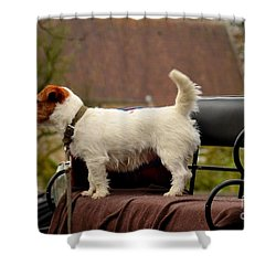 Cute Dog On Carriage Seat Bruges Belgium Shower Curtain by Imran Ahmed