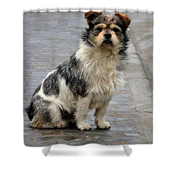 Cute Dog Sits On Pavement And Stares At Camera Shower Curtain by Imran Ahmed