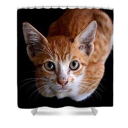 Cute Kitten Shower Curtain