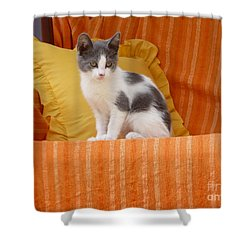 Shower Curtain featuring the photograph Cute Kitty by Vicki Spindler