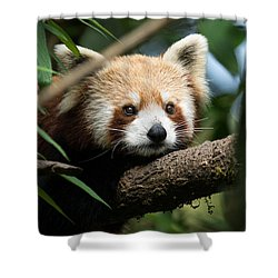 Cute Panda Shower Curtain by Fotosas Photography