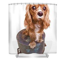 Cute Puppy Card Shower Curtain by Edward Fielding