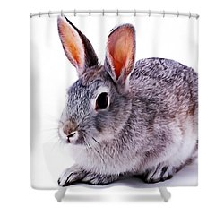 Cute Rabbit Shower Curtain by Lanjee Chee