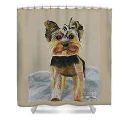 Cute Yorkie Shower Curtain