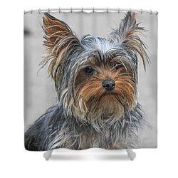 Cute Yorky Portrait Shower Curtain