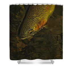 Cuttbow Shower Curtain