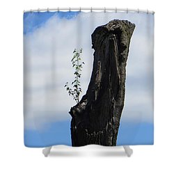 Cycle Of Life Shower Curtain by Sonali Gangane