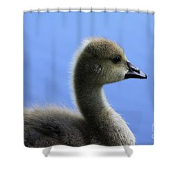 Cygnet Shower Curtain by Alyce Taylor
