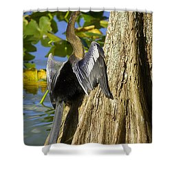 Cypress Bird Shower Curtain by Laurie Perry
