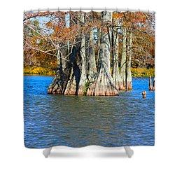 Cypress Birdhouse  Shower Curtain