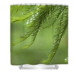 Cypress In The Mist - Art Print Shower Curtain