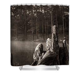 Cypress Knees In Sepia Shower Curtain