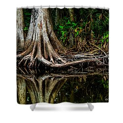 Cypress Roots Shower Curtain by Christopher Holmes