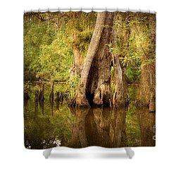 Cypress  Shower Curtain by Scott Pellegrin