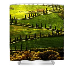 Cypresses Alley Shower Curtain by Jaroslaw Blaminsky
