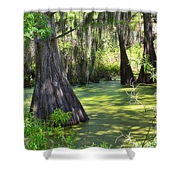 Cyprus Trees Shower Curtain by Patricia Greer
