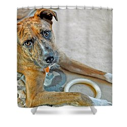Cyrus Shower Curtain by Lisa Phillips