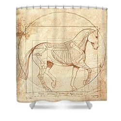 da Vinci Horse in Piaffe Shower Curtain by Catherine Twomey