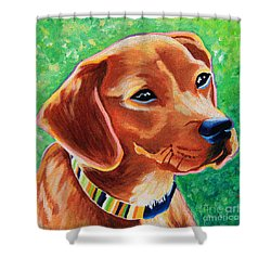Dachshund Beagle Mixed Breed Dog Portrait Shower Curtain